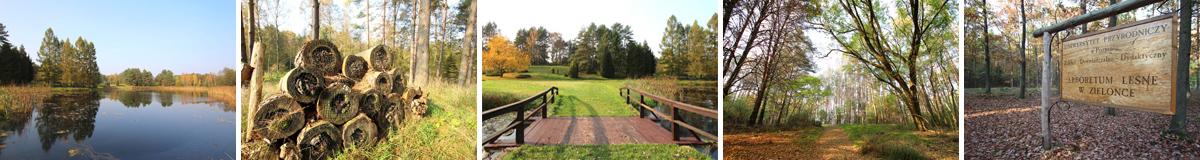 Arboretum Leśne w Zielonce - Puszcza Zielonka
